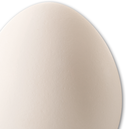 egg picture